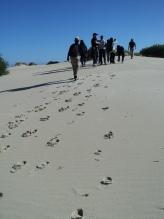 Henty Sand Dunes, Tasmania, Australia - photo by Katie @ Second-Hand Hedgehog travel blog