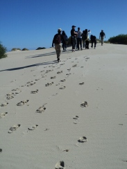 Henty Sand Dunes, Tasmania, Australia - photo by Katie @ Second-Hand Hedgehog travel blog