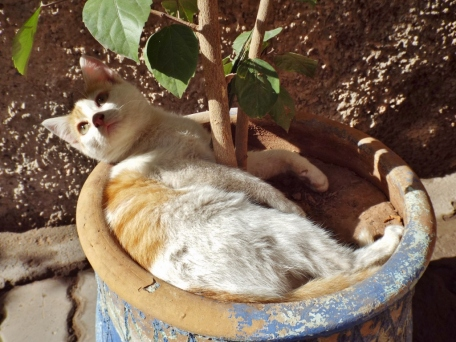 Cat in Marrakesh - Katie Hale, Cumbrian poet / writer
