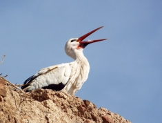 Stork, Marrakesh - Katie Hale, Cumbrian poet / writer