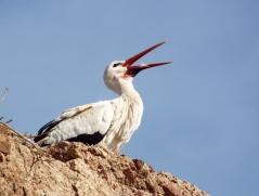 Stork, Marrakesh - Katie Hale, Cumbrian poet / writer