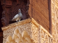 Pigeon at the Saadian Tombs, Marrakesh - Katie Hale, Cumbrian poet / writer