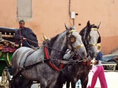 Horse and carriage, Marrakesh - Katie Hale, Cumbrian poet / writer