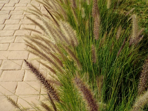 Grasses in Le Vizir Resort, Marrakesh - Katie Hale, Cumbrian poet / writer
