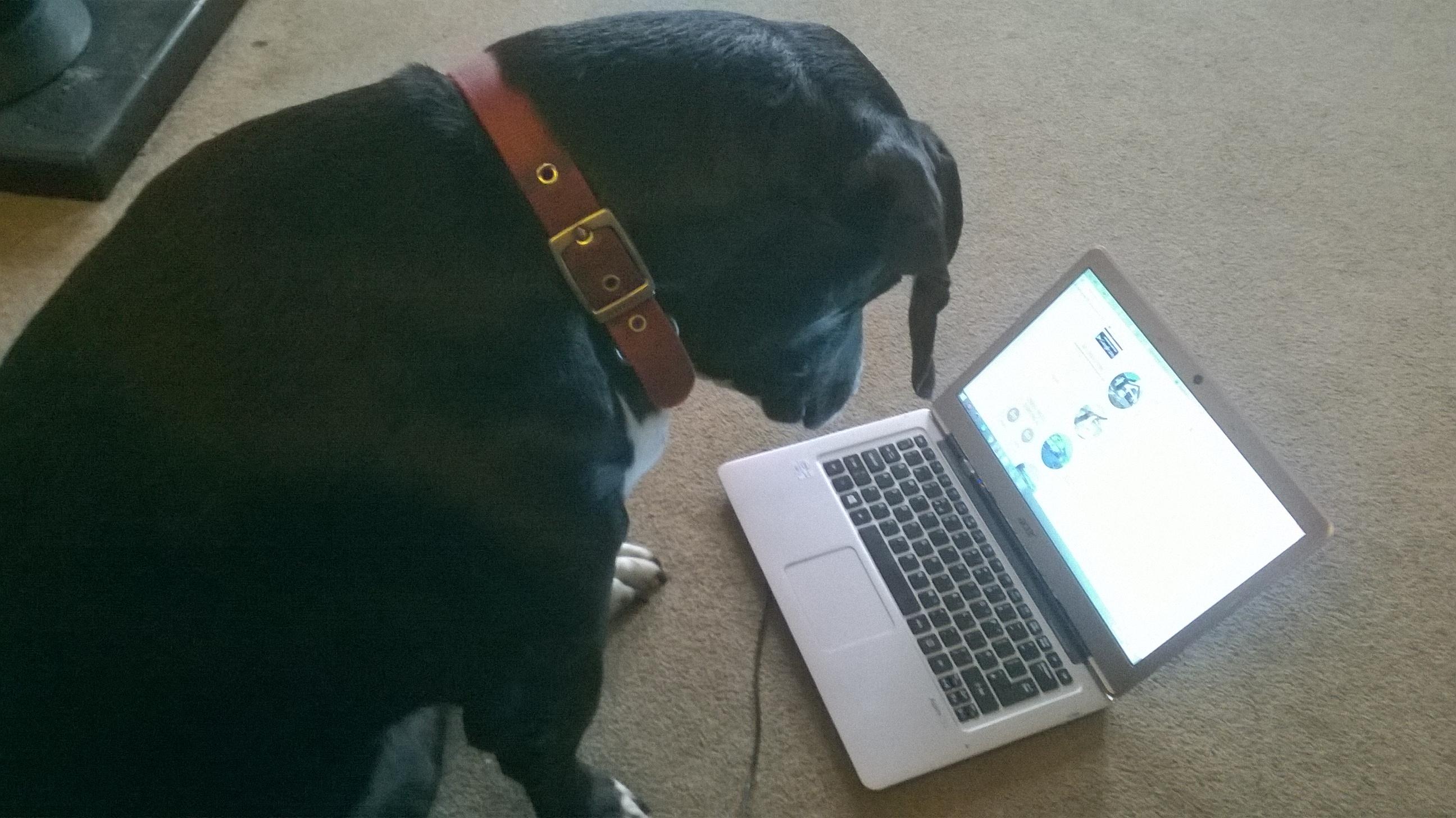 Social media addiction - Katie Hale, Cumbrian poet, writer and artist