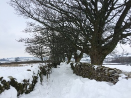 Snow in Cumbria - lonning