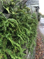 ferns on a wall