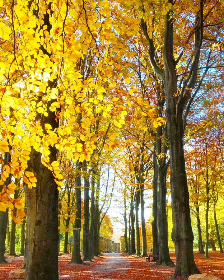 An avenue of autumnal trees in a Brussels park