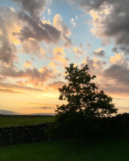 Peach and blue and yellow sunset in a cloudy sky, with a small silhouetted oak tree in the foreground