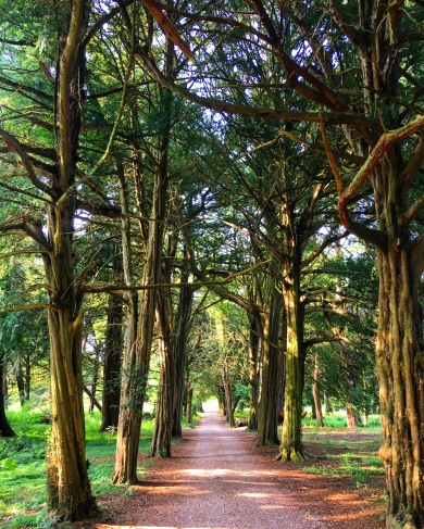 Avenue of trees with a path down the middle