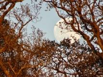 Full moon seen through branches