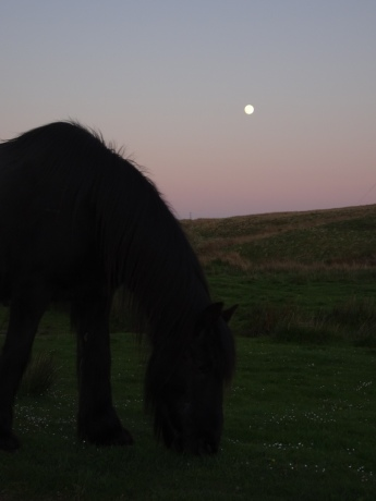 Close-up of a grazing fell pony under a purple sunset sky, with a full moon overhead