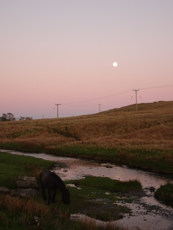Full moon in a purple sunset sky, over a river and open fell, with a grazing fell pony in the foreground