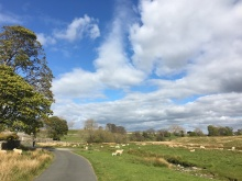 A road and lots of grass and sheep, under a blue sky