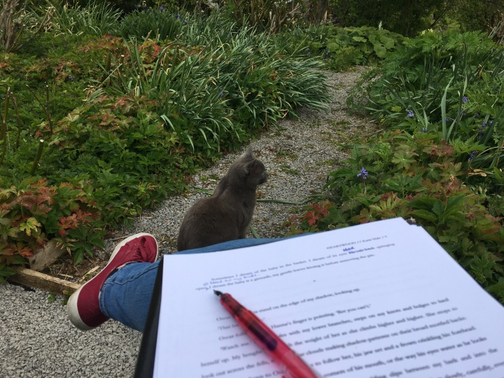 A pen resting on a printed manuscript, and beyond it, a cat sitting patiently on a path