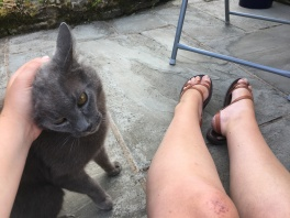 Legs on a patio, and beside them a grey cat with its head being fondled by Katie's hand