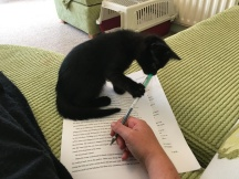 Black kitten grabbing at a pen while a hand tries to write on a printed manuscript