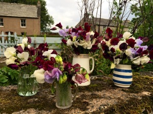 Four jugs of sweet peas on a garden wall